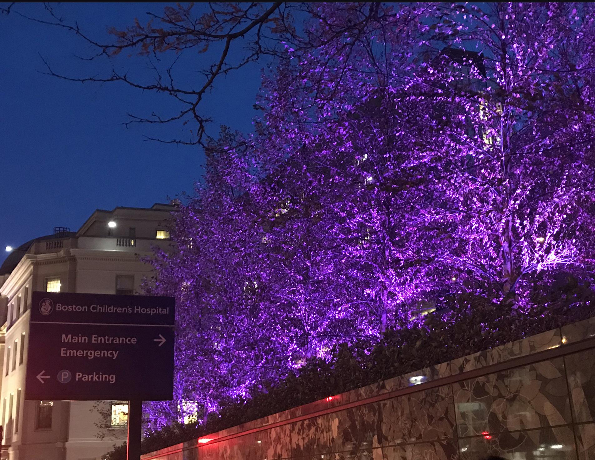 BCH Purple Trees WPD 2017
